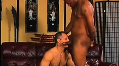 Older white stud gets his tight butt hole drilled hard by a black boy